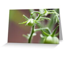 Killer Green Tomatoes Greeting Card