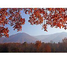 Layers of Autumn Photographic Print