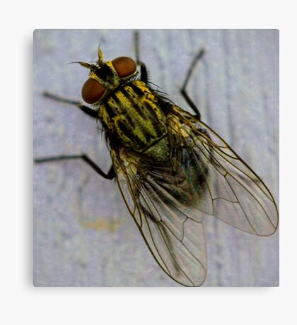 Plan of fly Canvas Print