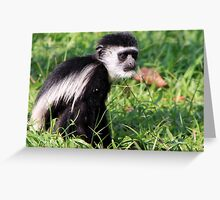 Black and White Colobus Greeting Card