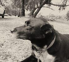Dog Days by MitchConway101