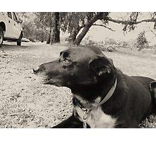 Dog Days Photographic Print