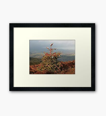 Christmas Tree on Simonside Northumberland Framed Print