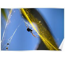 Golden Orb Weaver Poster