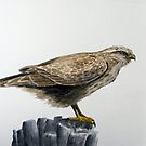 Buzzard by Lee Twigger