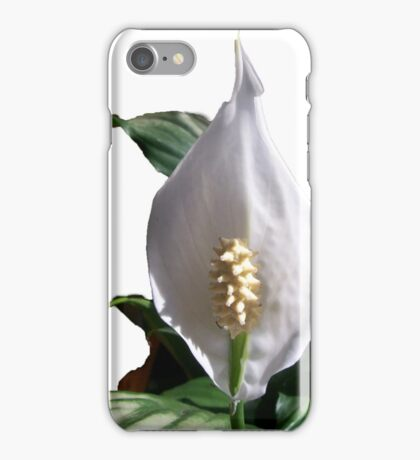 Madonna Lilly iPhone Case/Skin