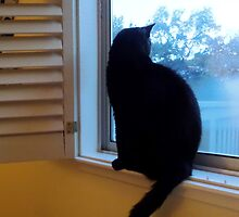 cat in the window at dusk by mmargot