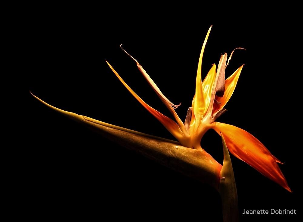 Bird of Paradise by smilyjay