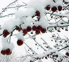 Snowy Crabapples by BarbL