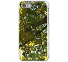 Light Leaves iPhone Case/Skin
