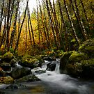 The Right Place by Charles & Patricia   Harkins ~ Picture Oregon