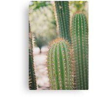 Macro Cacti Canvas Print