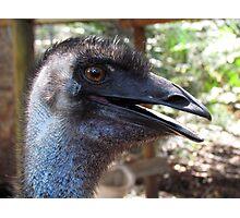 Lucky The Emu at Peel-Zoo, Pinjarra, Western Autralia Photographic Print