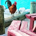The Rooster by goodieg