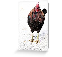 Cranky Old Bird Greeting Card