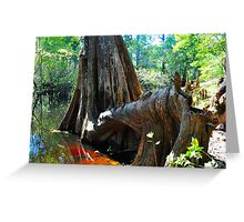 Cypress Tree Greeting Card
