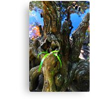 Small Plant Survives Among the Cypress Knees  Canvas Print