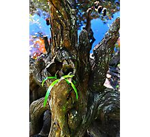 Small Plant Survives Among the Cypress Knees  Photographic Print