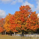 Autumn Beauty. by vette