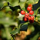 Happy Holly Days! by Sue Clamp