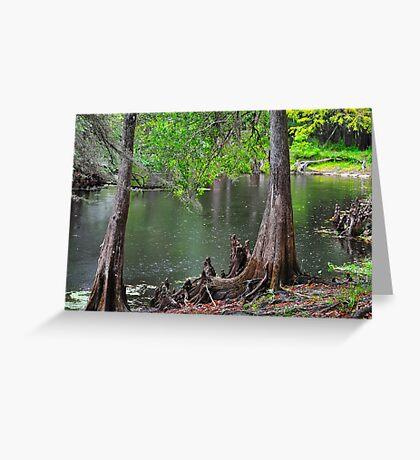 Cypress Swamp Greeting Card