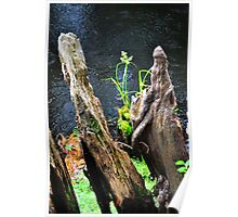 Plant Among Cypress Knees  Poster