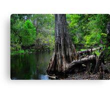Cypress Tree Scene  Canvas Print