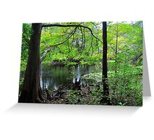 Swamp of Cypress Trees Greeting Card