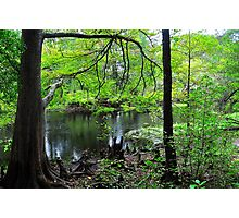 Swamp of Cypress Trees Photographic Print