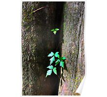 Ivy on a Tree Poster