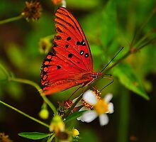 Butterfly on Flower by joevoz