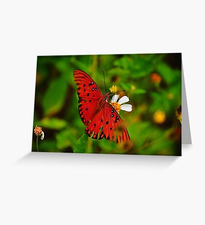 Butterfly with Wings Spread Greeting Card