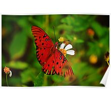 Butterfly with Wings Spread Poster