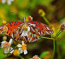 Small Orange Butterfly by joevoz