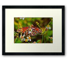 Small Orange Butterfly Framed Print