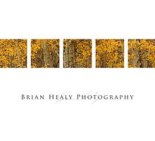 Western Landscapes and Wildlife by Brian Healy Photography