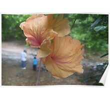 Heavenly Flower Deux Poster