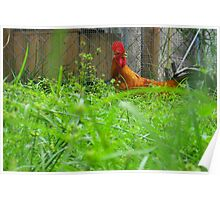 Wonderous Rooster Poster