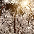 Winter Trees in Ruff Wood by Liam Liberty