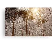 Winter Trees in Ruff Wood Canvas Print