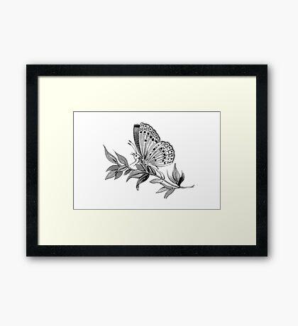 Gazing Butterfly Framed Print