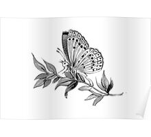 Gazing Butterfly Poster