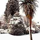 Victoria Park - Ormskirk Snow Scene by Liam Liberty