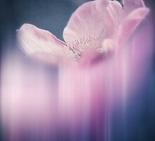 Fading Beauty by ♛ VIAINA
