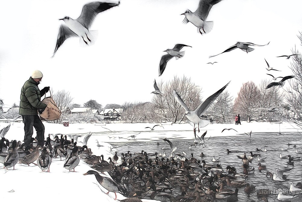 Feeding The Ducks - Ormskirk by Liam Liberty