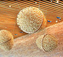 Wooden Eggs by mrthink