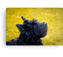 My name is not Scottie, it's Bonnie Metal Print