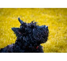 My name is not Scottie, it's Bonnie Photographic Print