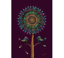 The Mandala Tree Photographic Print