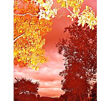 Fall Works Photographic Print